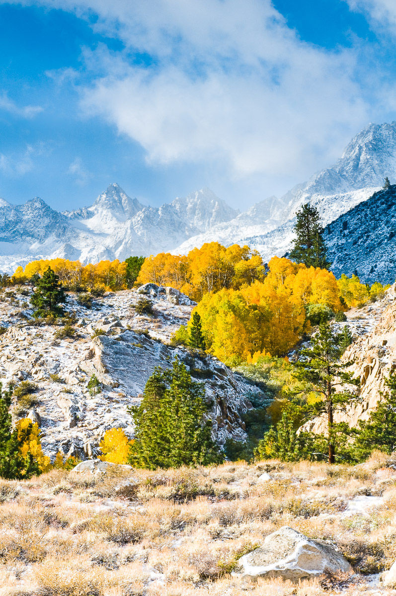 Fall aspen and the Sierra Crest with fresh snow